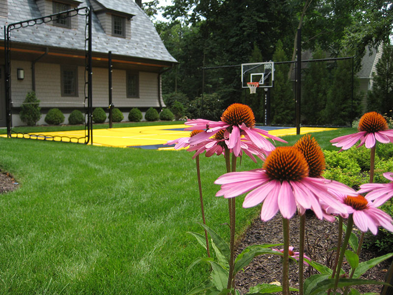 purple flowers with Michigan Basketball Court