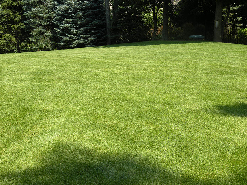 beautiful lucious green lawn